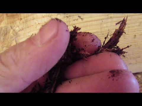 Реставрация сруба или как заменить гнилое, испорченное место на бревне, брусе
