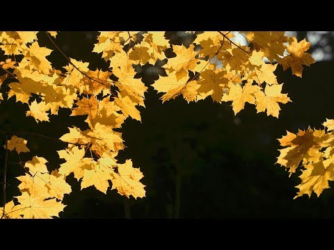Relaxing Fall Mood Music - relaxdaily N°115