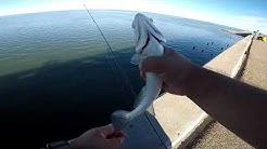 Speckled Trout Feeding Frenzy! (Corpus Christi Bay)