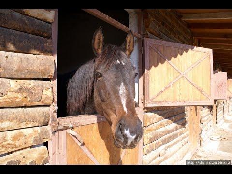 Как содержать лошадь в частном доме