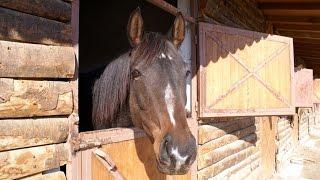 Содержание лошади на даче или в деревне. Денник,сарай, выбор лошади,стоимость постоя.