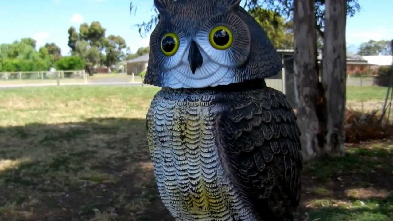 Owl Scarer Rotating Head