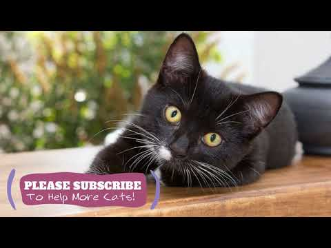 Calming Cat Music - 2 Hours of Feline ASMR Cat Sleep Music ☯LCZ102
