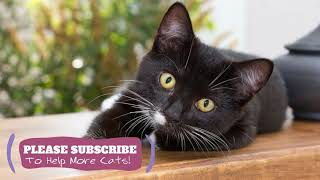Calming Cat Music  2 Hours of Feline ASMR Cat Sleep Music ☯LCZ102