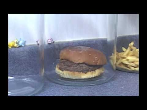 The Decomposition Of Mcdonald S Burgers And Fries Youtube