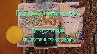 Комнатные растения Добровольских #3 / Посадка семян кактусов и суккулентов с OZ.by
