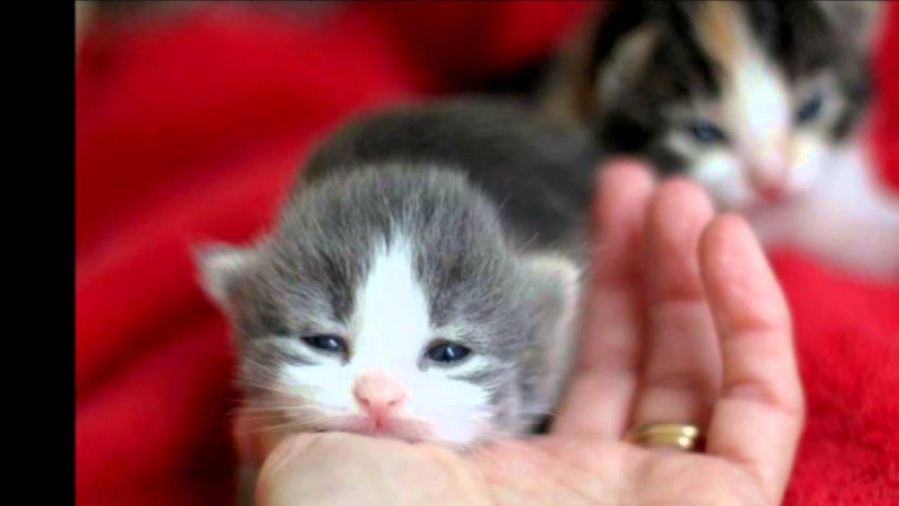 手のひらサイズの子猫画像