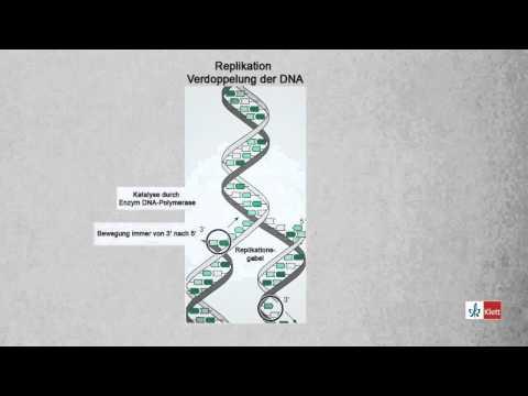 📔 Struktur Der Dna Arbeitsblatt Klett Pripreme