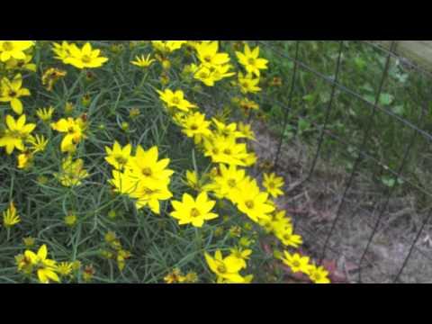 3x5 - John Mayer [Picture Lyric Video]