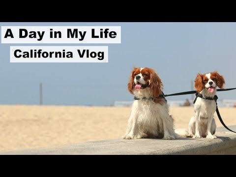 DOG VLOG Herky & Milton in Venice Beach California | A Day In My Life