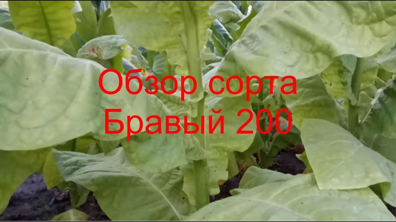 Интернет-магазин семян и растений центр садовода. Купить семена почтой.