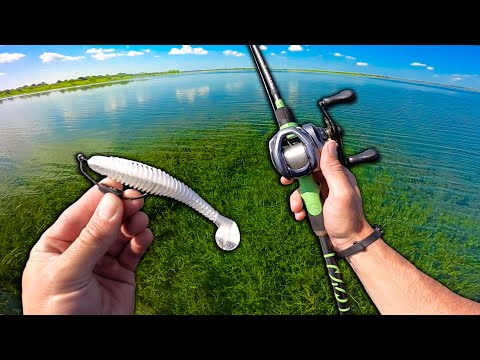 Hunting SUPER Clear Water Fish In THICK Grass!
