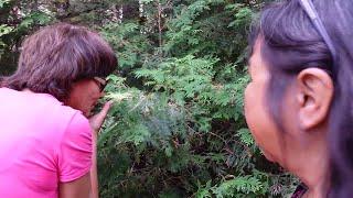 (A/C) Algonquin Kokoms Shelley & Lisa talking about traditional-medicines & culture - Quebec.