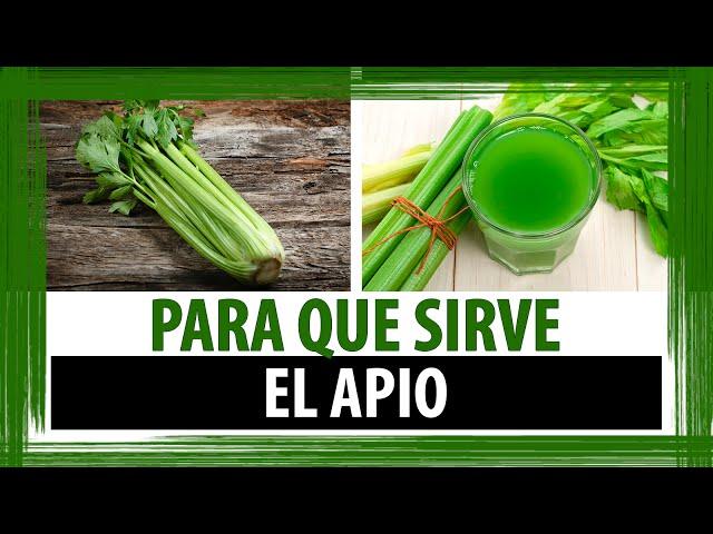 PARA QUE SIRVE EL APIO | PROPIEDADES, BENEFICIOS Y CONTRAINDICACIONES DEL APIO