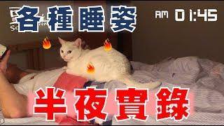 【豆漿與白目鴿】半夜日常!! 豆漿半夜都怎麼睡!?