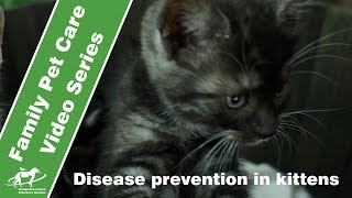 Protecting your kitten- vaccinations, worming and flea control- Companion Animal Vets