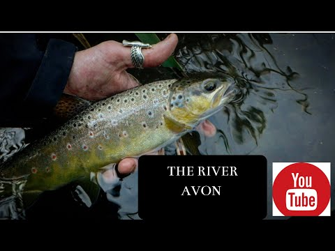 FLY FISHING RIVER AVON (SURPRISE CATCH ON MY MAYFLY PATTERN)