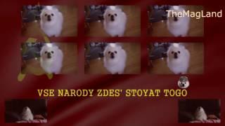 KOTovskiy - Собака патриот поёт запрещенный гимн СССР