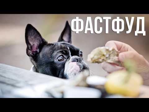 Вопрос: Что из продуктов нельзя давать своей собаке, почему?