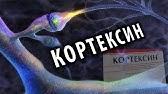 Пароксетин Паксил - YouTube