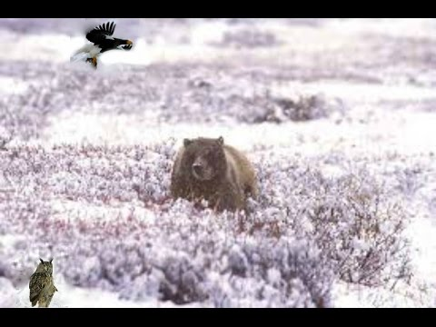 Kamchatka Wilderness[Nature Documentary]HD