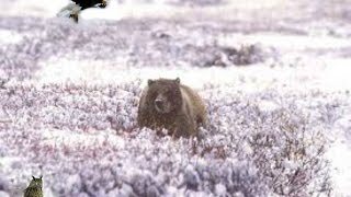 Kamchatka Wilderness[Nature Documentary]HD