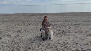 Los perros guía de Murcia realizan un paseo virtual para conmemorar su Día Internacional