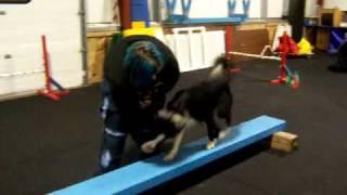 Beginner Agility Class (dog Walk)