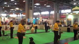 Kennel Club Good Citizen Dog Scheme Gold Display - Crufts 2014 (display 2)