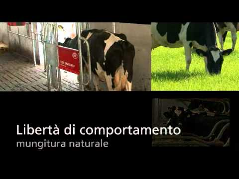 Lely Astronaut A4 - Product video (Italian)