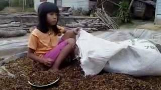Children Coffee Labor in Sumatra: Children's Sweat in Your Cups of Coffee