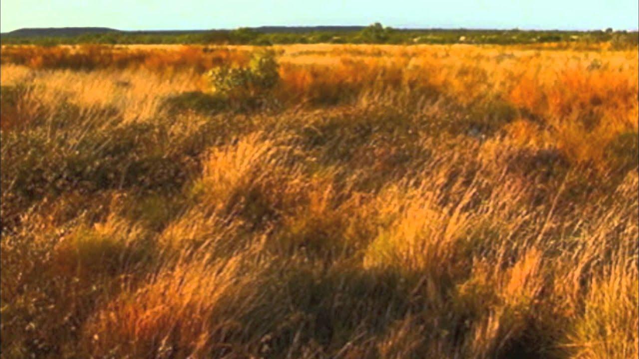 Grasslands in Australia and Africa - YouTube
