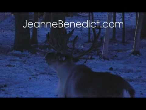 Jeanne Benedict's North Pole, Alaska Adventure with Santa!