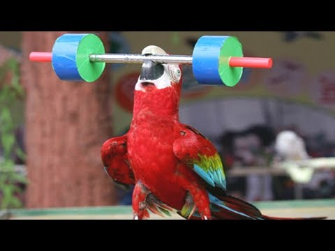 FUNNIEST PARROTS – Cute Parrot And Funny Parrot Videos Compilation [BEST OF]