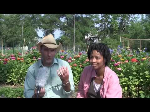 Michigan Urban farming Initiative - Greening of Detroit Interview