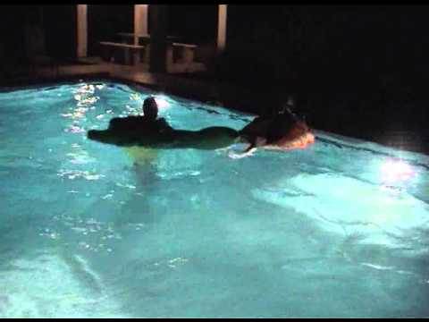 Man Attacked By Crocodile In Swimming Pool Youtube
