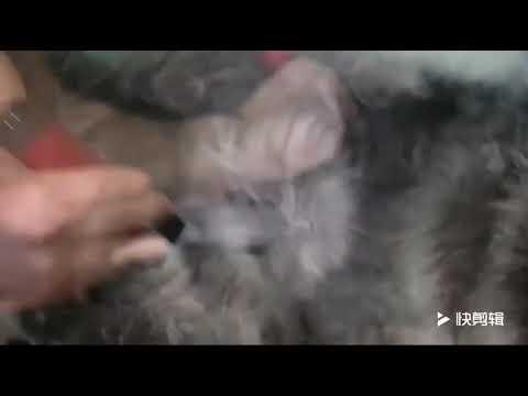 Професионална машинка за подстригване на кучета