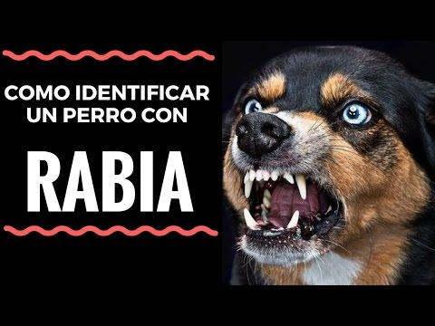 Sintomas de la Rabia en Perros: Salva tu Vida y la de tu Perro