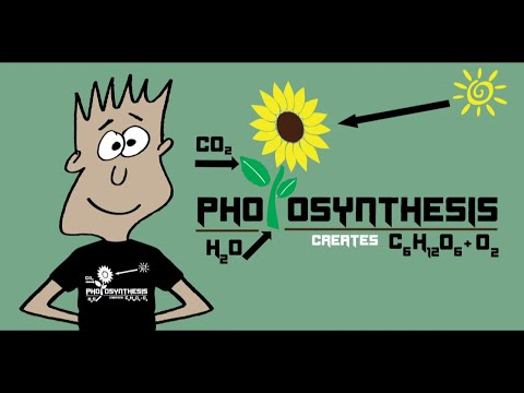 photsynthesis song Searched for 'photosynthesis song' and found 120568 results, download photosynthesis song songs and music videos for free , free mp3 and music video downloads - gosongnet.