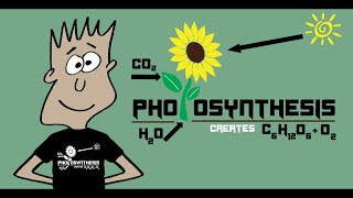 Photosynthesis song | Mister C