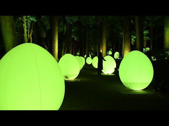 偕楽園にデジタルアート集団 梅林の夜に「埋没して」