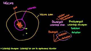 Hücre Çekirdekleri, Zarları, Ribozomlar, Ökaryotlar ve Prokaryotlar (Biyoloji / Zarlar ve Taşınım)