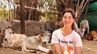 Animal Aid~インドの街で、動物たちの保護活動に献身的に取り組んでいるボランティアたちを紹介しよう