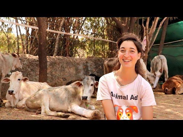 Volunteering at Animal Aid in India: Joy awaits!