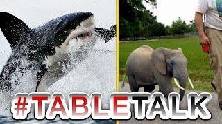 Shark Week and Tiny Elephants on #TableTalk!