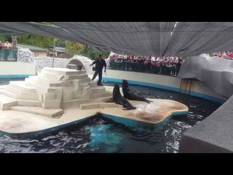 Seal show in the  Zoo
