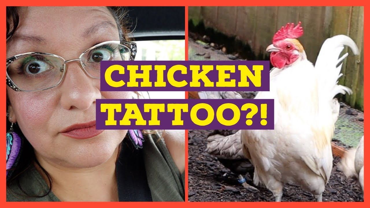 Chicken Tattoo Update Chickenlandia Vlog Youtube