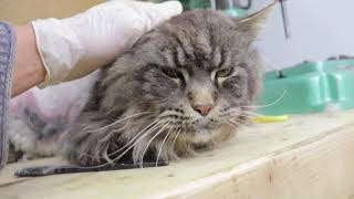 Cat Rescue and Restoration
