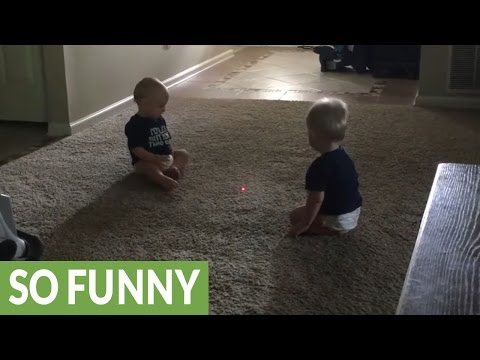 Twins mesmerized by laser dot, chase after it