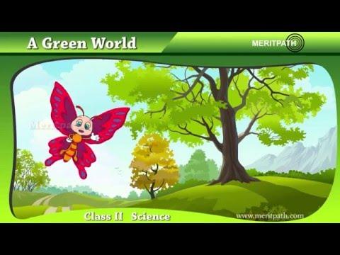 Class II: Science - Green World, Trees, Shrub, Climbers, Creepers